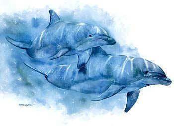 Dessins de dauphins - Dessin a imprimer de dauphin ...